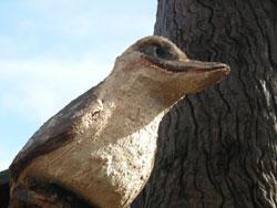 habitat-tree-kookaburra