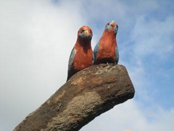 habitat-tree-rosellas