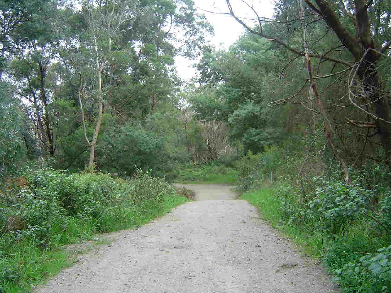 new trail2