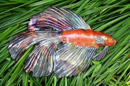 Fish by Heather Wilson